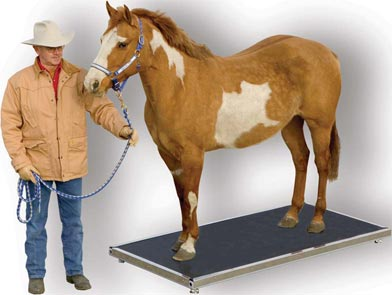 Horse Scale